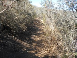 Plenty of shade on the Miner's Loop trail!