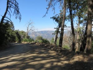 View along dirt road in Los Padres National Forest