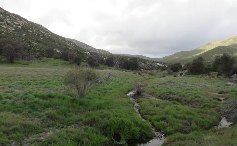 An Evening Walk Around Pine Valley Creek