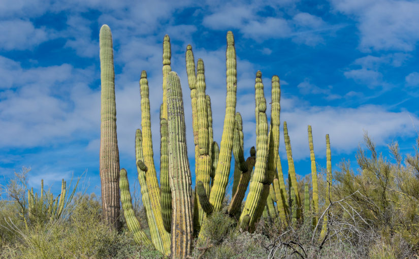 Organ Pipe Cactus National Monument and Gunsight Wash