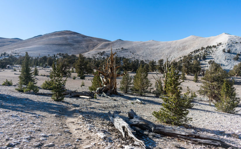 Ancient Bristlecone Pine Forest and Hot Creek